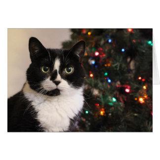 Tuxedo Cat Christmas Card