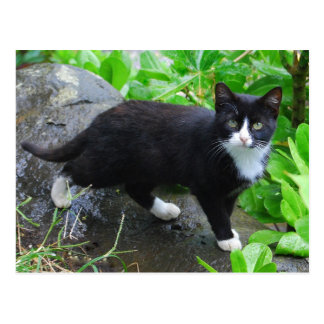 Tuxedo Cat in a Park Postcard