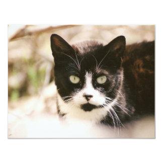 Tuxedo Feral Cat Invitations