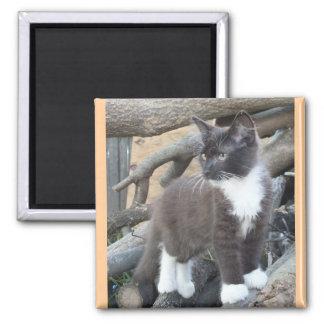 Tuxedo Kitten Square Magnet