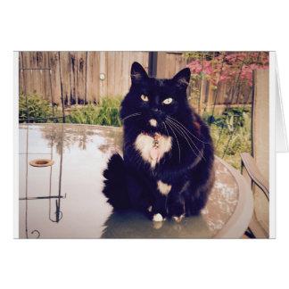 Tuxedo Kitty Blank Greeting Card