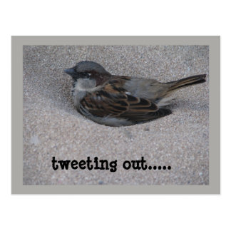 tweeting bird postcard