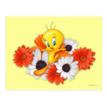 Tweety With Daisies Postcard