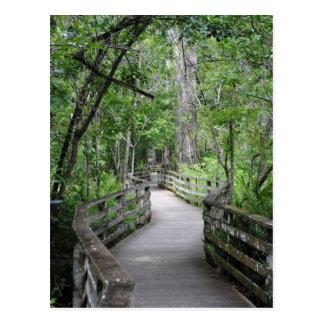 Twelfth Path Postcard