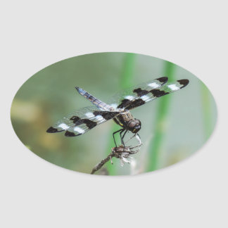 Twelve Spotted Skimmer Dragonfly Oval Sticker