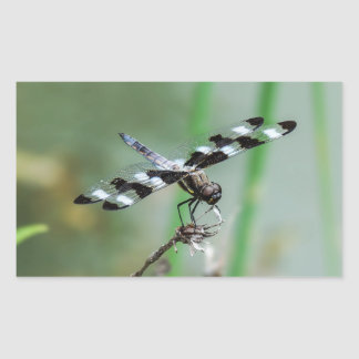 Twelve Spotted Skimmer Dragonfly Rectangle Sticker