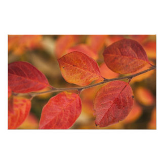 Twig covered with autumn leaves photo