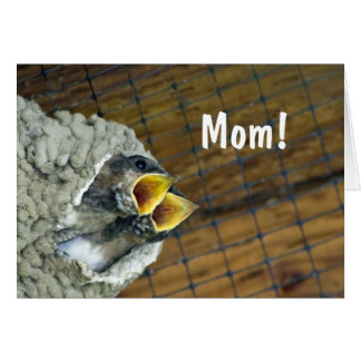 Twin Baby Birds Mother's Day Card