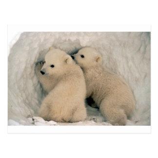 TWIN BABY POLAR BEARS POSTCARD