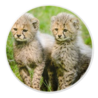 TWIN BABY WILD CATS ON A CERAMIC KNOB