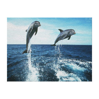 Twin Dolphins Canvas Print