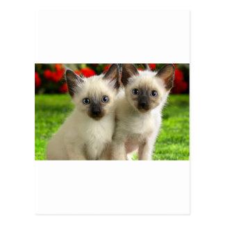 Twin Kittens Postcard