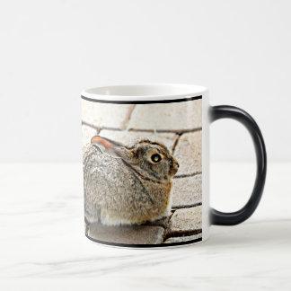 """Twins"" Sonoran Bunnies Custom Morphing Cup"