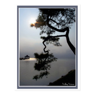 Twisted Pine Postcard