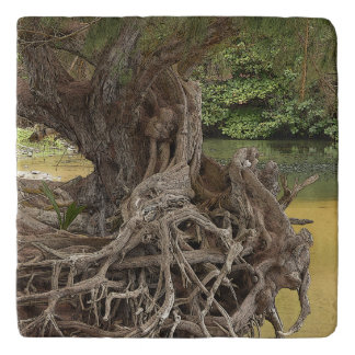"""""""TWISTED ROOTS ON RIVER BANK"""" TRIVET"""