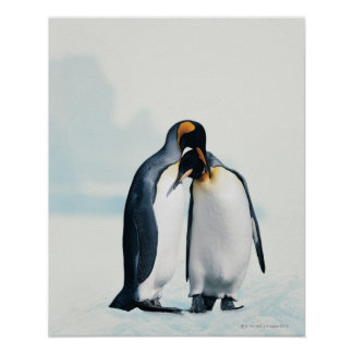 Two affectionate penguins print