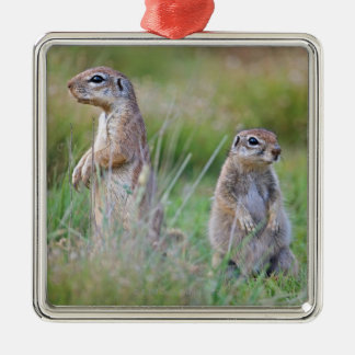 Two alert Ground Squirrels, Jamestown District, Metal Ornament