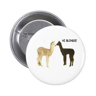 Two alpaca crias meet buttons