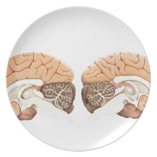 Two artificial human hemispheres dinner plate