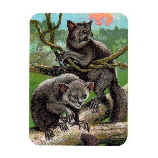 Two Aye-Ayes in a Tree in Madagascar Vintage Magnet