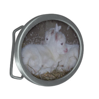 Two Baby Goats in Straw Oval Belt Buckle