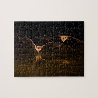 Two bats flying over water, Arizona Puzzles