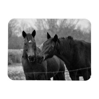 Two Best Friends -Horse Photograph Premium Magnet