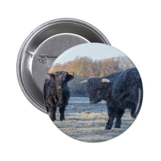 Two black scottish highlanders in frozen meadow 2 inch round button