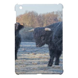 Two black scottish highlanders in frozen meadow iPad mini cases