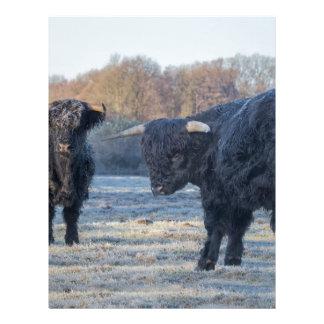 Two black scottish highlanders in frozen meadow letterhead design