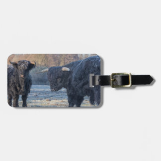 Two black scottish highlanders in frozen meadow luggage tag