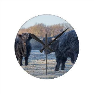 Two black scottish highlanders in frozen meadow round clock