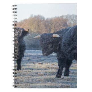 Two black scottish highlanders in frozen meadow spiral notebook