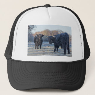 Two black scottish highlanders in frozen meadow trucker hat