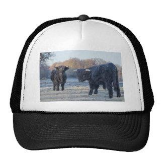 Two black scottish highlanders in frozen meadow trucker hat