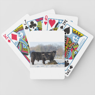 Two black scottish highlanders in winter snow bicycle playing cards