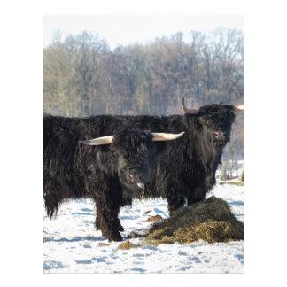 Two black scottish highlanders in winter snow custom letterhead