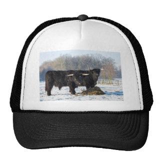 Two black scottish highlanders in winter snow trucker hat