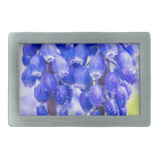 Two blue grape hyacinths in spring belt buckles