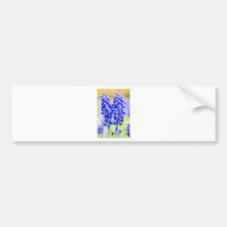 Two blue grape hyacinths in spring bumper sticker