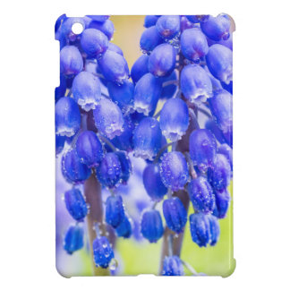 Two blue grape hyacinths in spring iPad mini cases