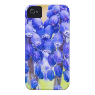 Two blue grape hyacinths in spring iPhone 4 Case-Mate cases