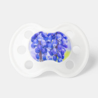 Two blue grape hyacinths in spring pacifier