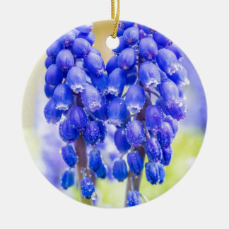Two blue grape hyacinths in spring round ceramic ornament