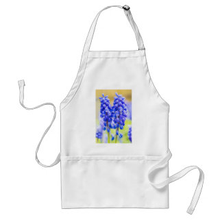 Two blue grape hyacinths in spring standard apron