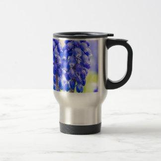 Two blue grape hyacinths in spring travel mug