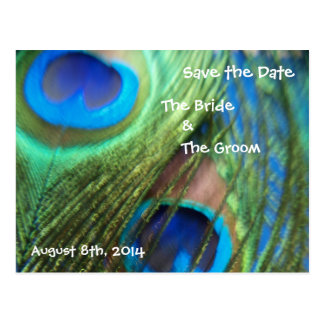 Two Blue Peacock Feathers Save the Date Postcard