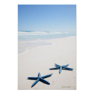 Two blue starfish at water's edge on tropical poster