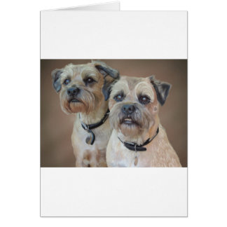 Two Border terriers Card