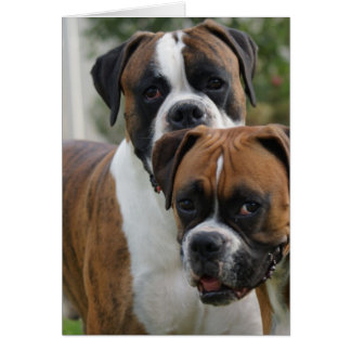 Two Boxer Dogs Greeting Card